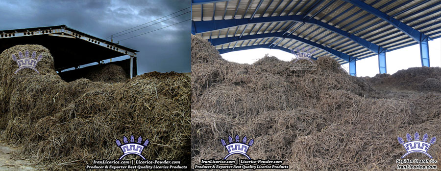 Iran_Licorice_Sepidan_Osareh_Factory_Root
