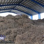 licorice root factory